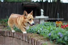Patrolling the garden :)
