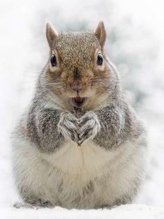 Winter Squirrel by Art Klukovich - Photo 143252569 - 500px