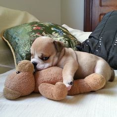 <b>If a bulldog hasn't made you smile today then you should probably look at this right now.</b>