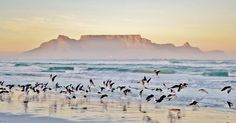 The Best of Cape Town On Any Budget: Enjoying Nature.. Here are our favourite places to enjoy nature – and where they lead you – in and around the Mother City.  And if you're not keen on getting yourself around, book our Cape Town City & Peninsula Tours and we'll do all the hard work. You can just sit back, relax, and enjoy the sights.