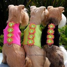 Shop the HOTTEST #DogCouture shop online! #PoshPuppyBoutique #PoshPuppy…