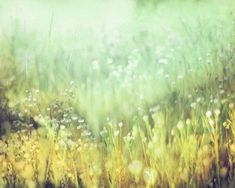 Abstract Landscape Photography, Field of Wildflowers, Impressionistic Wall Art, Aqua, Mint Gold, Meadow of Small White Flowers 8x10 Print