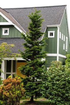 Slender Hinoki False Cypress | 8-12 ft tall, 4-5 ft wide | zones 4-8 | full sun and regular weekly watering | Credit: Doreen Wynja
