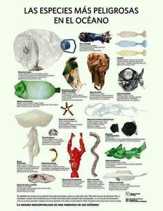 #Infografia. Las especies más peligrosas de los océanos