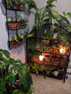 Room With Plants, House Plants Decor, Plant Decor, Plant Rooms, Decoration Inspiration, Room Inspiration, Room Ideas Bedroom, Bedroom Decor, Appartement Design