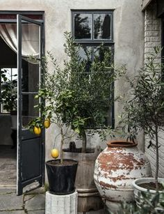 Variety of old pots. One with a lemon tree.