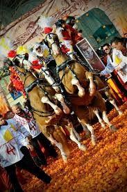 cavalli e carnevale ivrea