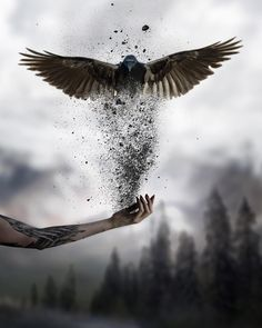 Photo manipulation is not only about transforming or altering a photograph using various methods and techniques, it can be considered as an art form because it Dark Fantasy Art, Fantasy Artwork, Dark Art, Gif Kunst, Cute Gifs, Dream Art, Creative Photos, Surreal Art, Photo Manipulation