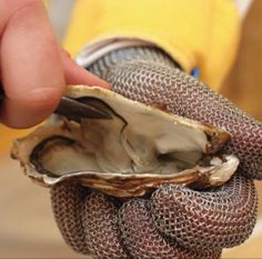 Shellfish: 5 Fantastic Ways to Cook Clams, Oysters, & Mussels Travel Sweepstakes, Shucking Oysters, Raw Oysters, Protective Gloves, Cocktail Sauce, Vegetarian Paleo, Mussels, Southern Recipes, Clams