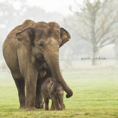 kanakaman:  llbwwb:   (via Proud mama.. by Mark Lynham / 500px)
