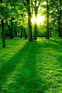 Paisaje verde amanecer