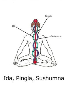 They are a dense network of of entirely subtle energy channels which provide energy to every cell throughout the entire body. Hatha Yoga ...