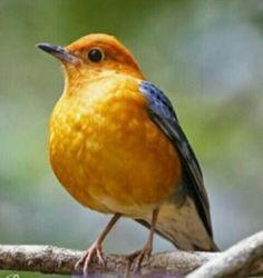 2a8be09dc75235 Uccelli Multicolore, Foto Di Uccelli, Pappagalli, Mangiatoie Per Uccelli,  Splendidi Uccelli,
