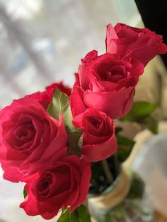 Depression, Anxiety, Rose, Flowers, Plants, Pink, Florals, Roses, Planters