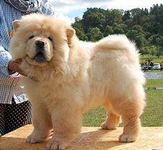 Baron, 2xBest Puppy