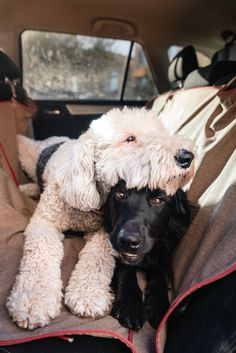 Dog Travel, Bench Seat, Seat Covers, Hammock, Fur Babies, Your Dog, Car Seats, To Go, Parents