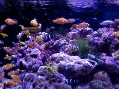 ORA - Oceans, Reefs & Aquariums tank lit with Ecoxotic Panorama Marine & Actinic LEDs — at Global Pet Expo.
