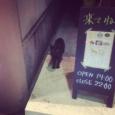 クロネコいました #ねこ #cat #なんであのときカフェ
