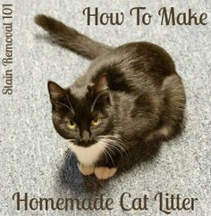 Below is a video showing instructions for making homemade cat litter from old newspapers, and a couple other ingredients.  All you need to make your own