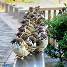 Birds of a feather. All Birds, Cute Birds, Pretty Birds, Birds Of Prey, Little Birds, Beautiful Birds, Animals Beautiful, Types Of Photography, Nature Animals