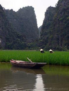 Women farmers tending rice field in Nimh Binh, Vietnam.