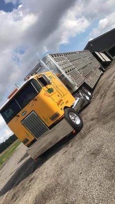 Peterbilt 379, Peterbilt Trucks, Motor Company, Cattle, Rigs, Vehicles, Tractors, Gado Gado, Wedges
