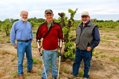 From left to right: Ray Kaufmann & Patrick Campbell (Tierra Divina) and Steve Felten (Klinker Brick Winery) in Jean Rauser's anvient Carignan vineyard (planted 1906). Photography by Randy Caparoso. #Lodi #wine