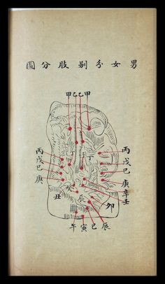 Outline of Western Theories of the Human Body — Viewer — World Digital Library