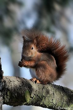 ♥ squirrel