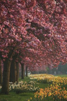 Springtime ~ North Yorkshire, England        posted by www.futons-direct.co.uk