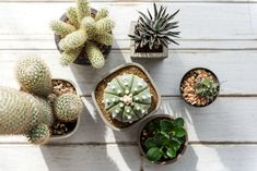 Various small Cacti. Get this image for free at www.rawpixel.com