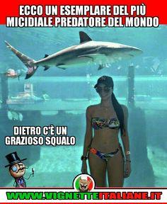 Ecco un esemplare del più micidiale predatore del mondo... :D (www.VignetteItaliane.it)