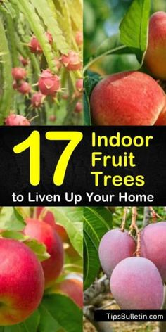17 Indoor Fruit Trees to Liven Up Your Home