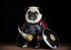 Medieval Pug!