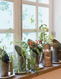 window herb garden <3