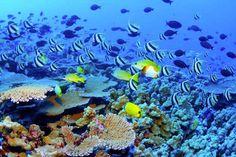 La Grande Barrière de Corail, au large de la côte du Queensland en Australie