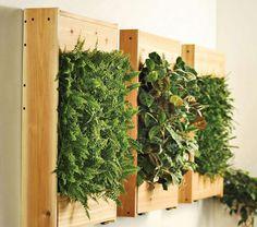 plantes en caisses accrochées sur mur