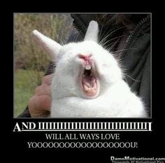 bunny....I don't know why I thought this was so funny lol