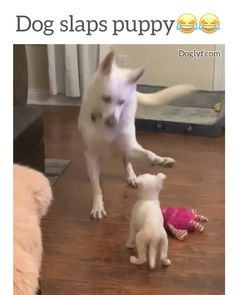 Just parenting - Funny Dog Videos - Cute Funny Dogs, Funny Dog Memes, Funny Cats And Dogs, Funny Dog Videos, Funny Animal Memes, Funny Animal Pictures, Cute Funny Animals, Cute Baby Animals, Animals And Pets