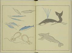 kitao-masayoshi-illustrated-animals (11)