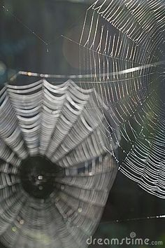 Spider webs by Paul Maguire, via Dreamstime