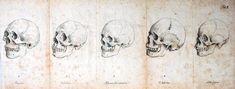 Medical-Anatomy-Skull-2   CVLT Nation