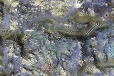 A stunning new infrared image from NASA's Mars Reconnaissance Orbiter has revealed the worm-like fissures blanketing the floor of a mysterious crater on Mars. It shows the bizarre 'ejecta blanket. Army Wedding, Glitch In The Matrix, One Step Beyond, Curiosity Rover, Nasa Missions, Nasa Images, Dragon Scale, Space Images, Latest Images
