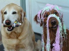 Silly string dogs