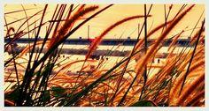 ഓരോ പുൽപ്പൂവിലും  നിൻ അരുണിമ പകർന്നിട്ട്  മായുന്നു നീ രാവിൻ  മൗനങ്ങളിൽ...  Another sunset click from Vallarpadam Container Terminal Road.   Photography by Arun Chullikkal  Camera: MotoG