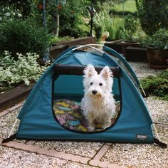 Planning a camping trip this summer with the pup or kitty? Pet Tent is a favorite for those with small to medium sized dogs, cats and for multi-pet families!