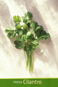 Fresh Cilantro: One of the Fresh Summer Ingredients at P.F. Chang's #PFCSummer
