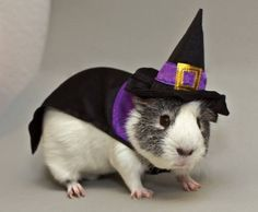 Halloween Pet Event   go.dallasnews.com   Dallas/Fort Worth