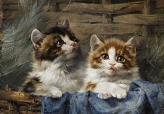 Two kittens in basket with blue cloth - Julius Adam