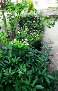 Permaculture: Four seasons garden idea. Photos of blooms and names of flowers for inspiration